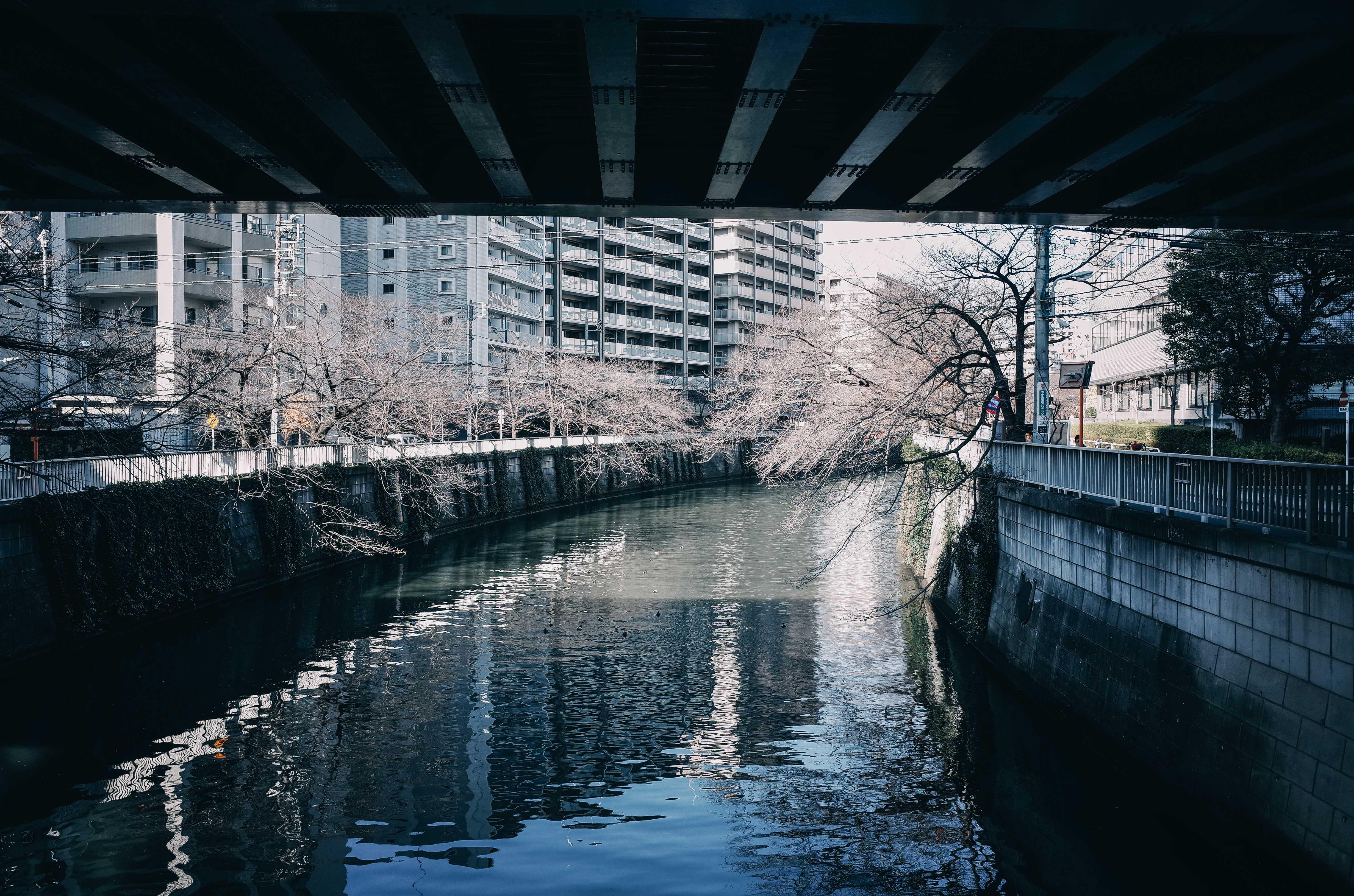 冬の目黒川