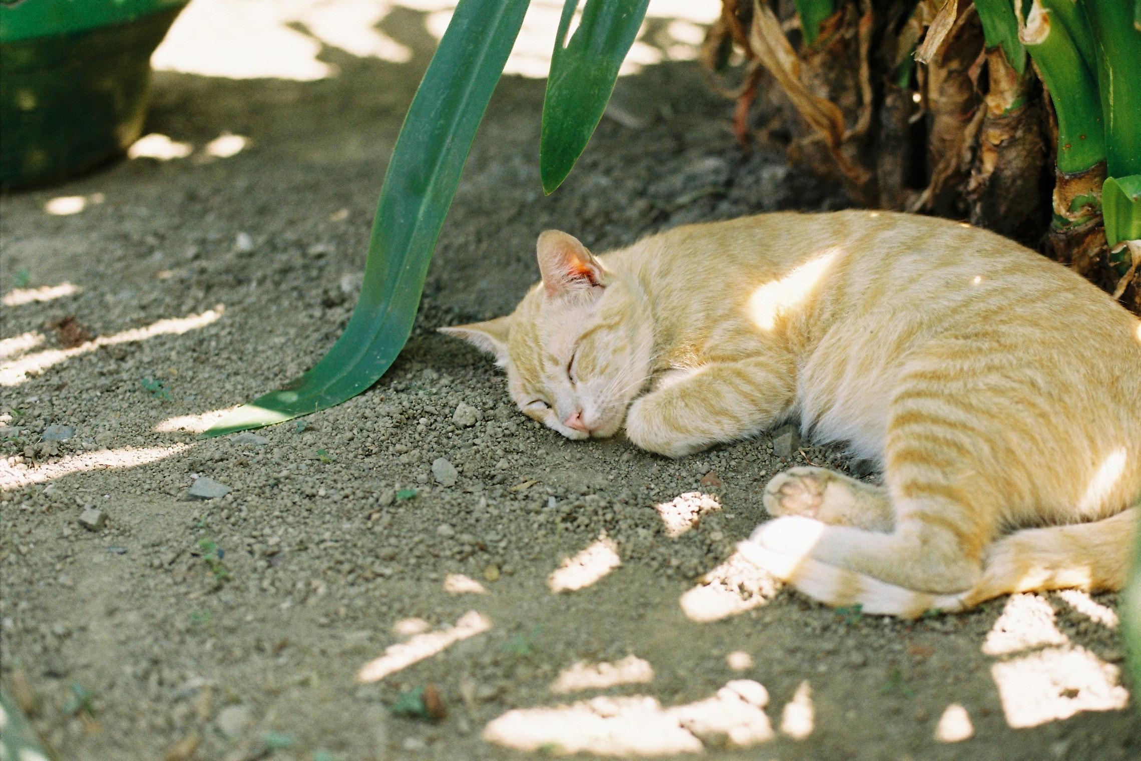 日陰のネコ