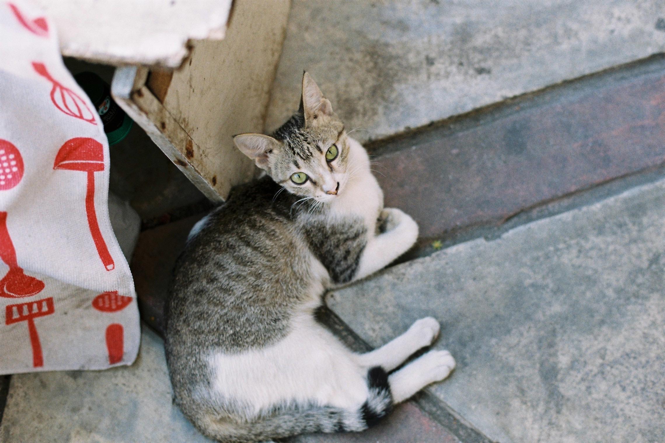 街角のネコ