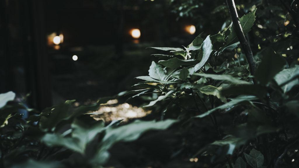 野鶴亭お庭②